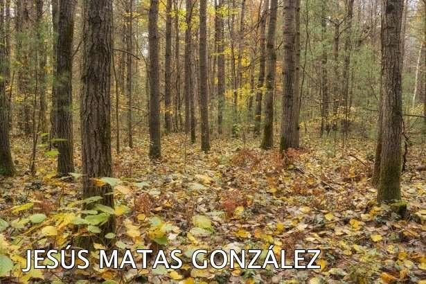 JESÚS MATAS GONZÁLEZ