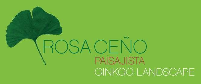GINKGO LANDSCAPE
